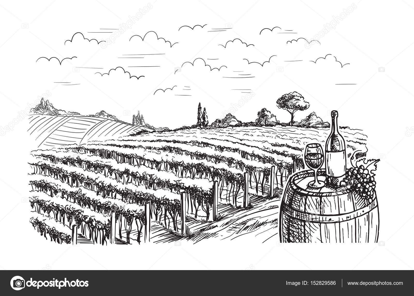 Wiersze Winnica Winogron Roślin Grafika Wektorowa