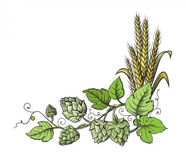 Wheat and beer hops branch with wheat ears, leaves and hop cones.