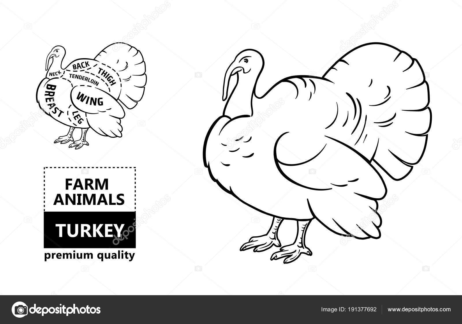 Vintage Turkey Diagram - Product Wiring Diagrams •