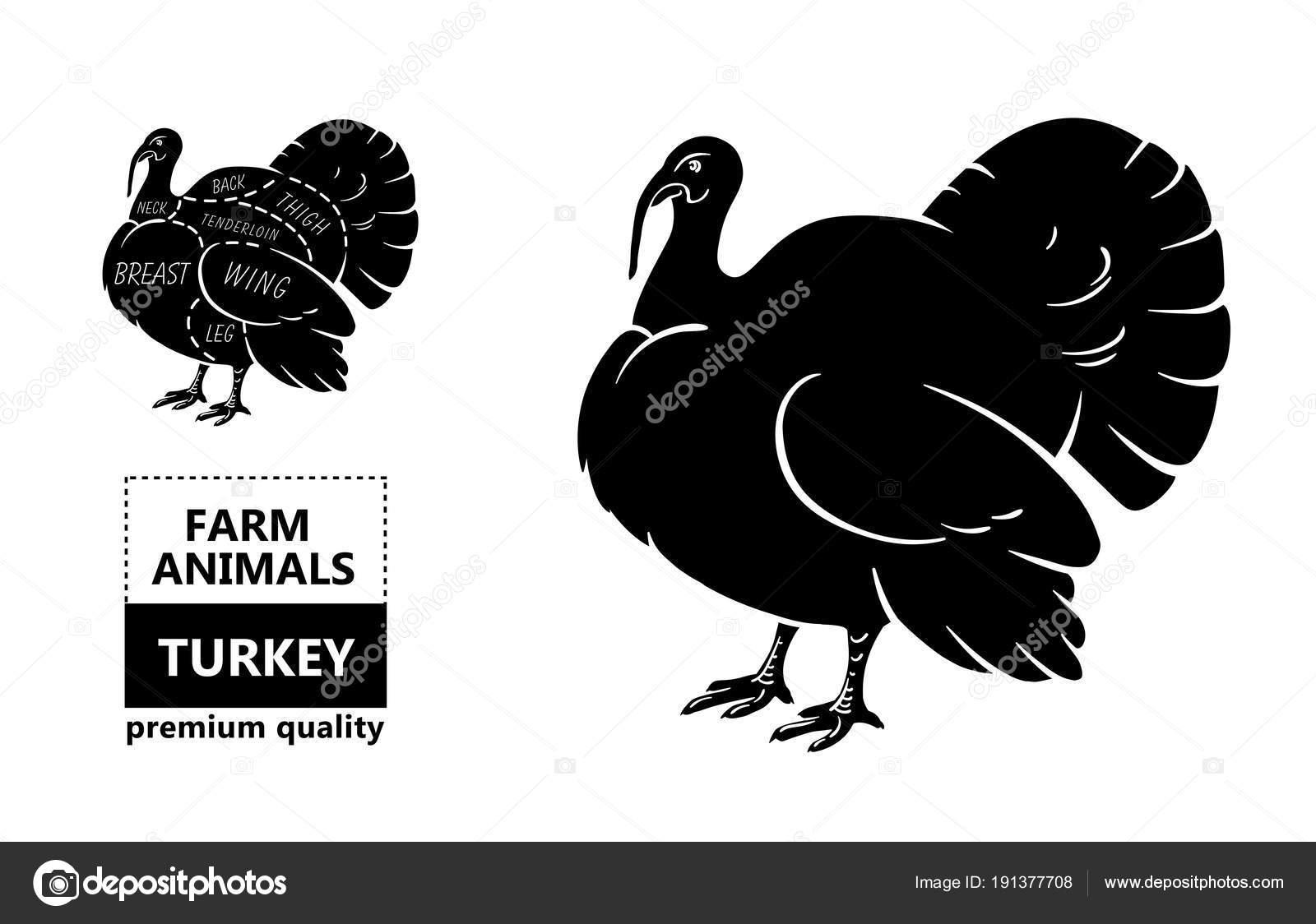 Diagrams Of Turkeys - Auto Wiring Diagram Today •