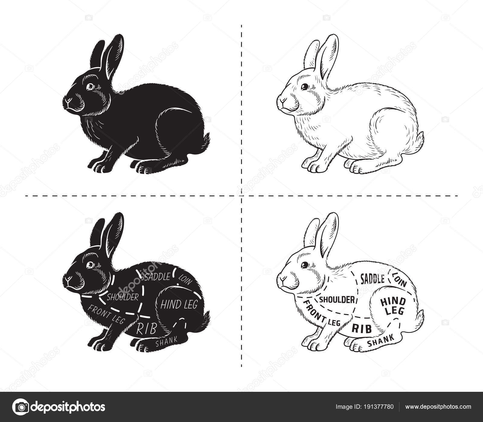 depositphotos_191377780 stock illustration cut of rabbit poster butcher cut of rabbit poster butcher diagram for groceries, meat stores
