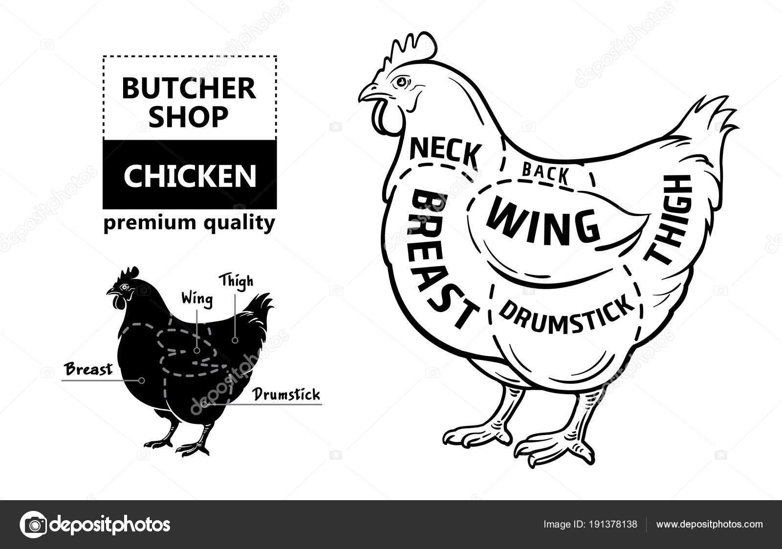 Corte de carne conjunto. Cartel carnicero diagrama y esquema - pollo ...