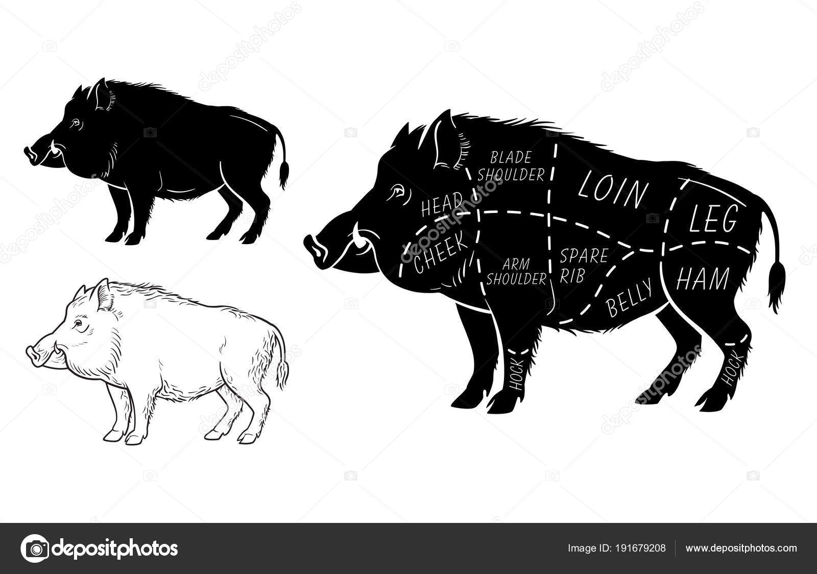 Wild Hog Boar Game Meat Cut Diagram Scheme Elements Set On