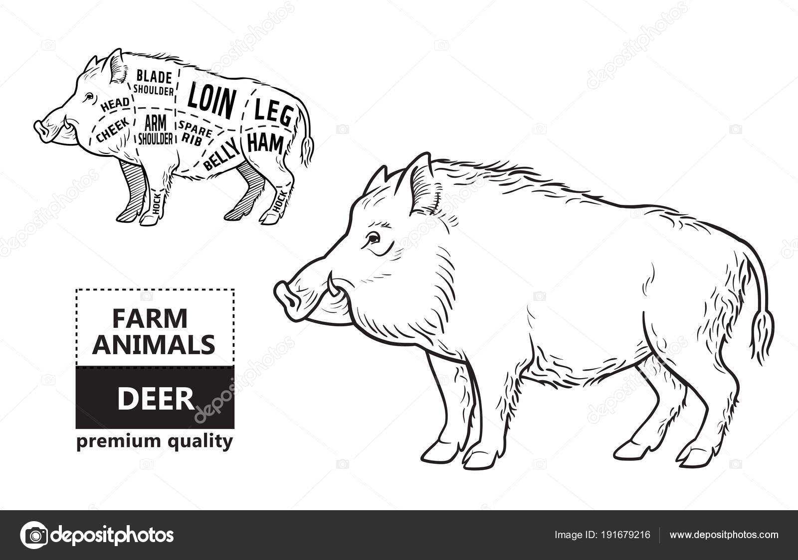 Lion Meat Cuts Diagram Car Wiring Diagrams Explained Chickencutsdiagram Wild Hog Boar Game Cut Scheme Elements Set On Rh Depositphotos Com Chicken Beef Steak