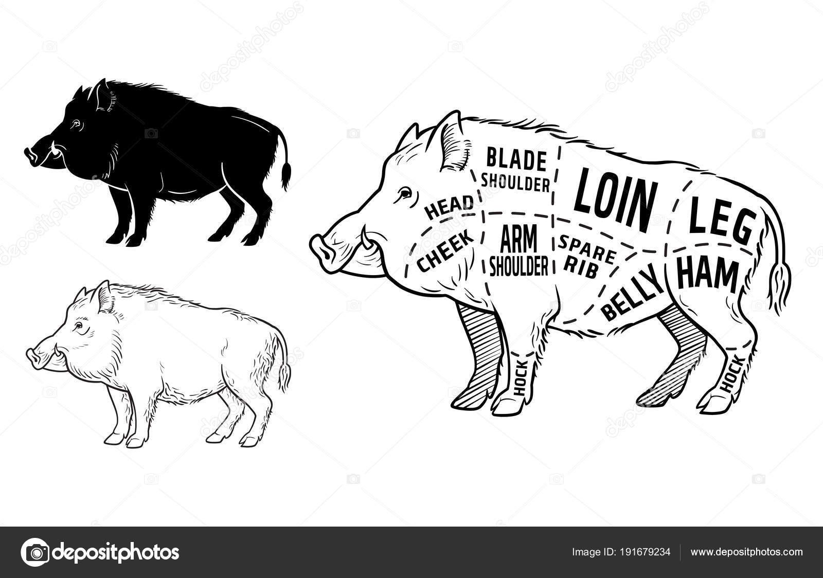 Diagram Of A Wild Hog - Download Wiring Diagrams •