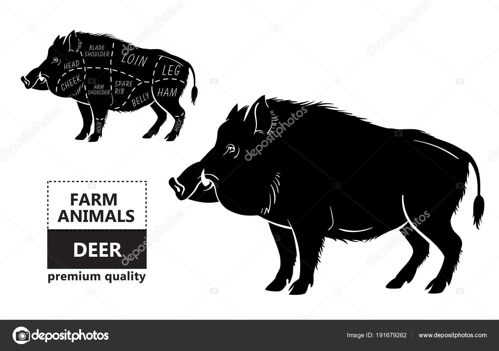 Wild Hog Boar Game Meat Cut Diagram Scheme Elements Set On Pig Chalkboard Stock