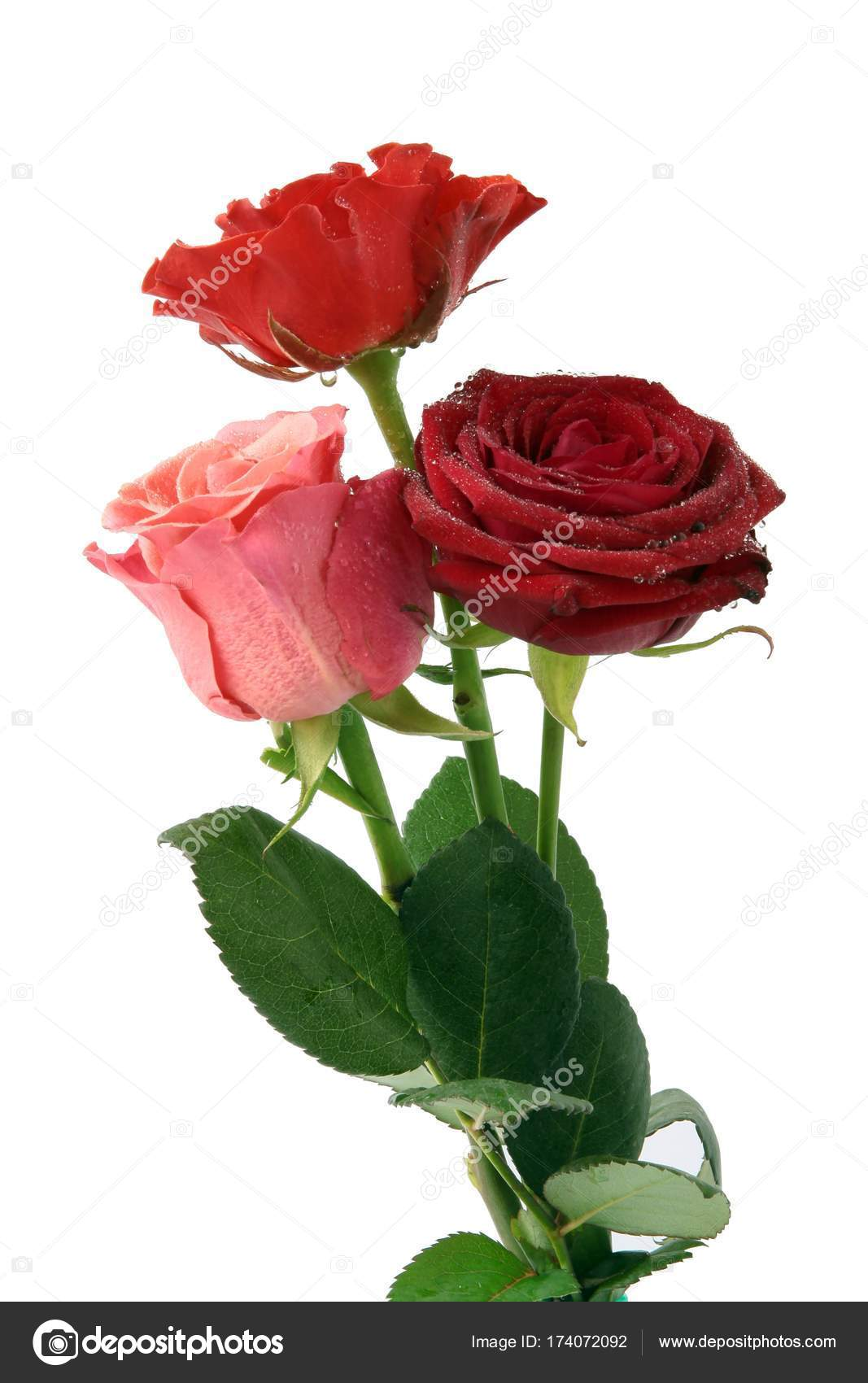 Rosa Bonitas Rojas Ramo Rosas Rojas Rosadas Foto De Stock