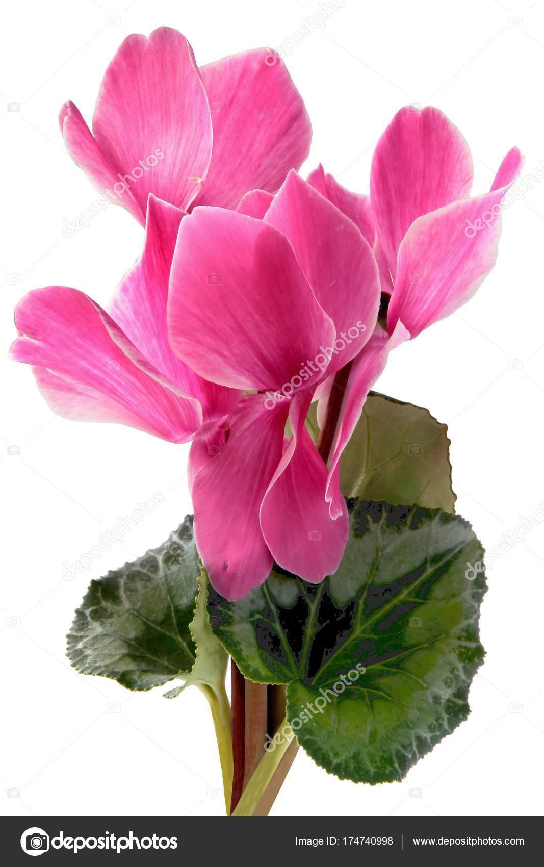 Цветы сохранить свежесть