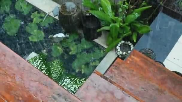 Rainy and pond in garden