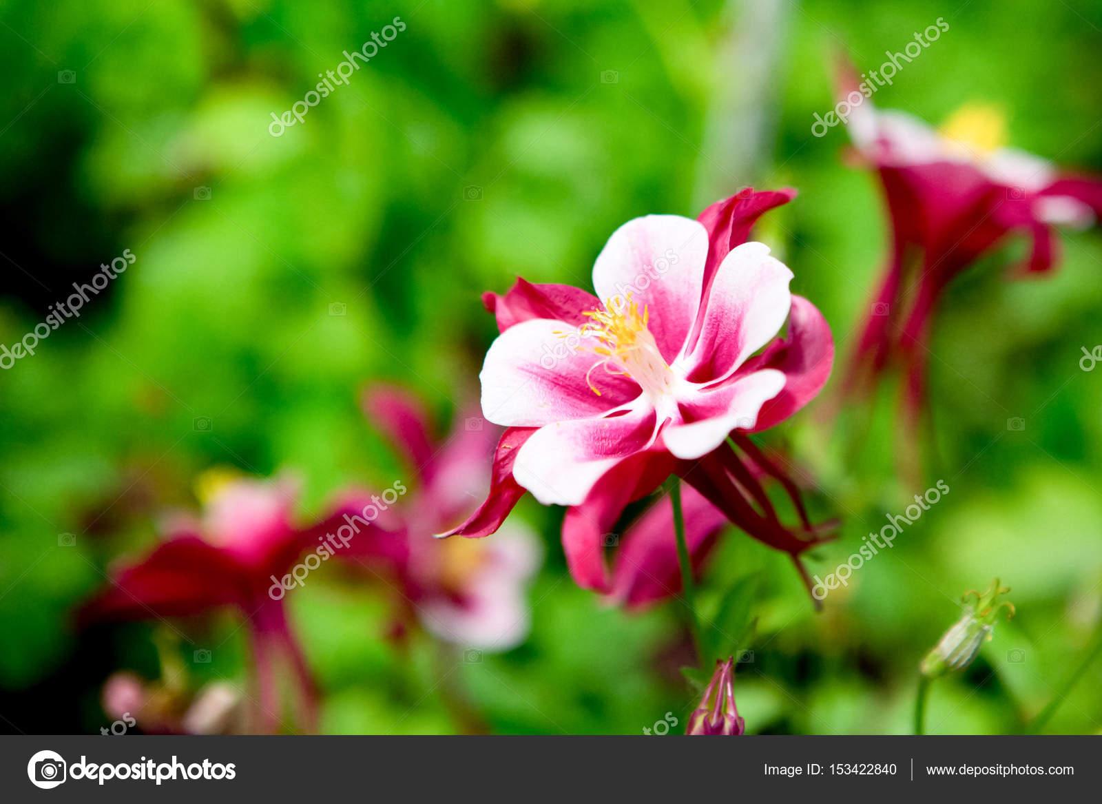 Filtre De Bruit Grain La Belle Fleur Rouge Blanc Sur Fond Flou