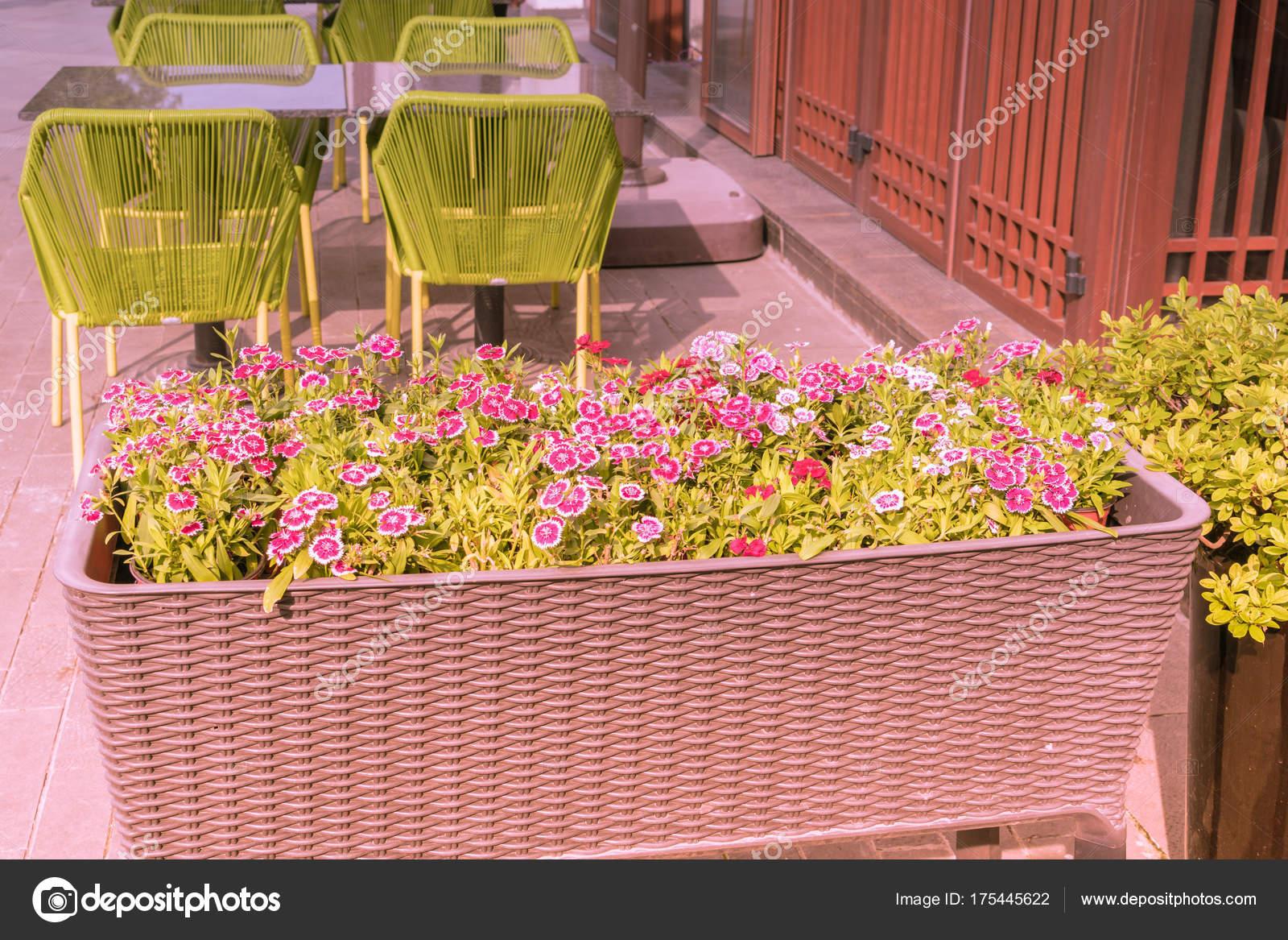 Pote De Flor Enorme Con Mesa Y Sillas Verdes Foto De Stock