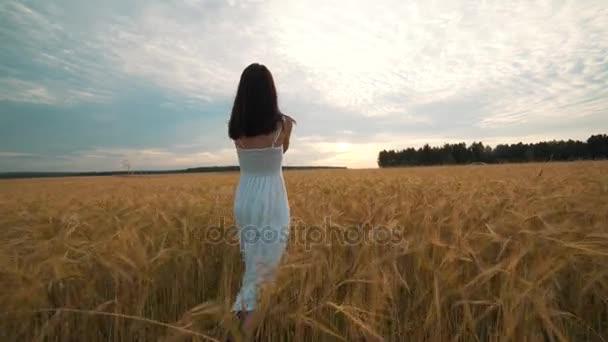 Egy napsütéses napon egy nő a séta egy Búzamező, fehér ruhát a természet háttér koncepció életmód ökológiai környezet boldog ember szabadság, csodálatosan gyönyörű kilátás