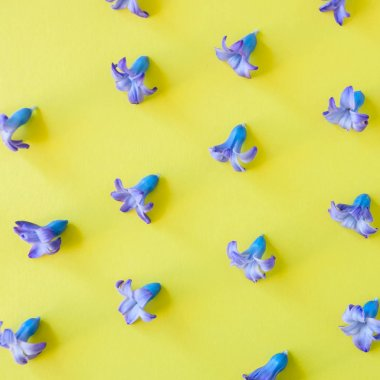 Violet petals of hyacinth flower on a yellow background. Top vie