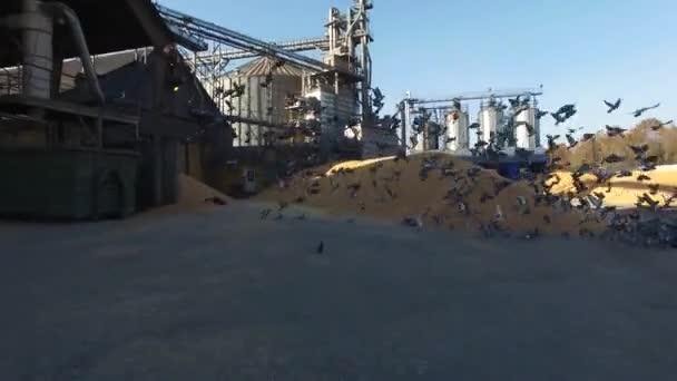 pig farm, feed mill,aerial