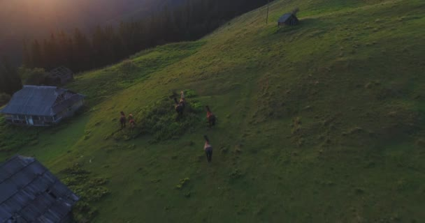 horses are running through the mountains, slow motion