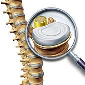 Segmento di anatomia del tratto lombare della colonna vertebrale