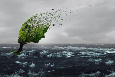 Surviving A Storm