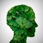 Ginkgo Biloba leaf Head