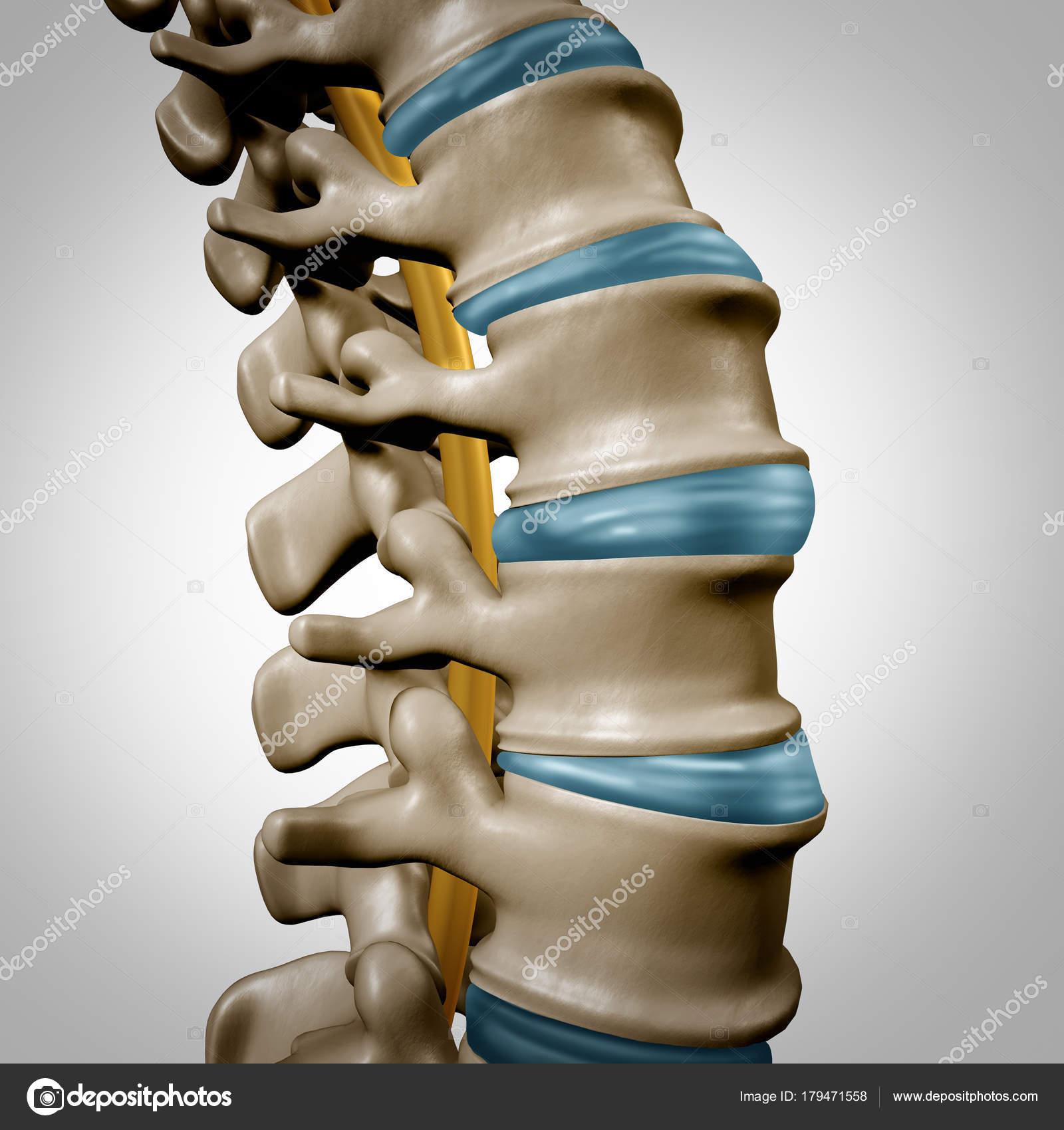 Sección de anatomía de columna vertebral humana — Fotos de Stock ...