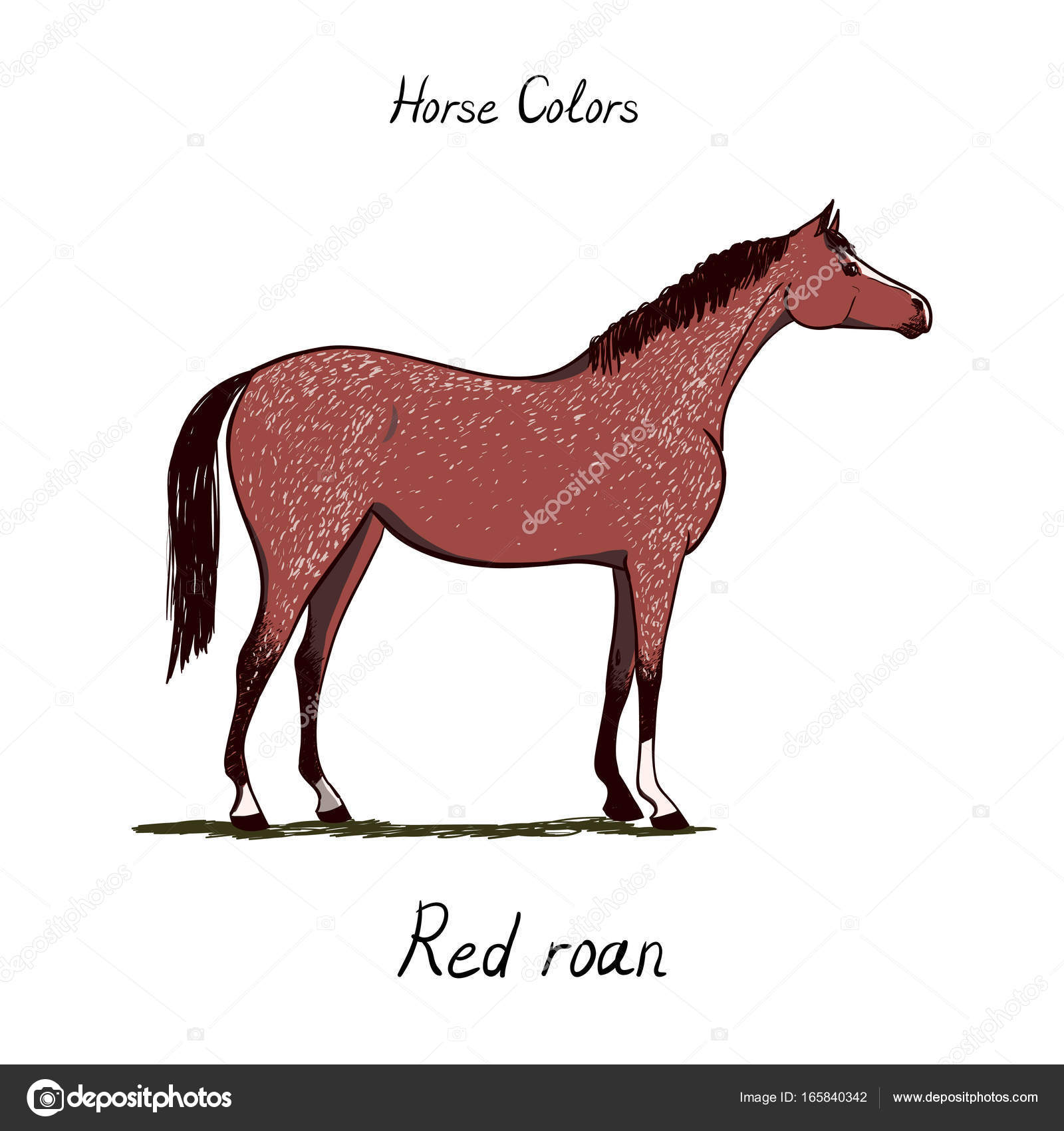 Horse color chart on white equine coat color with text equestrian horse color chart on white equine coat color with text equestrian scheme nvjuhfo Gallery