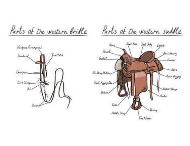 Parts of western saddle and bridle with text letters description.