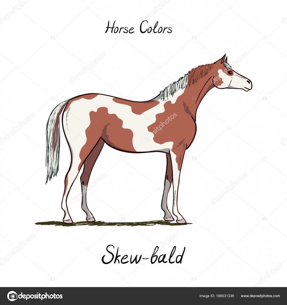 Carta de color de caballo Calvo oblicua sobre fondo blanco. Colores ...
