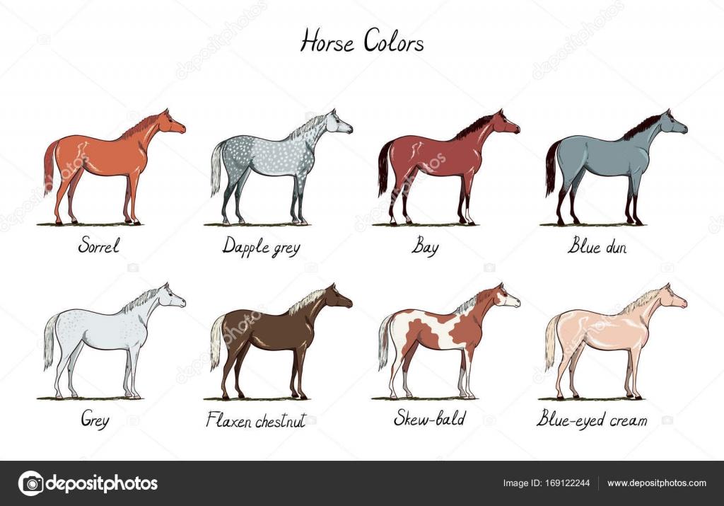 Juego de carta de color de caballo. Colores de pelajes con texto ...