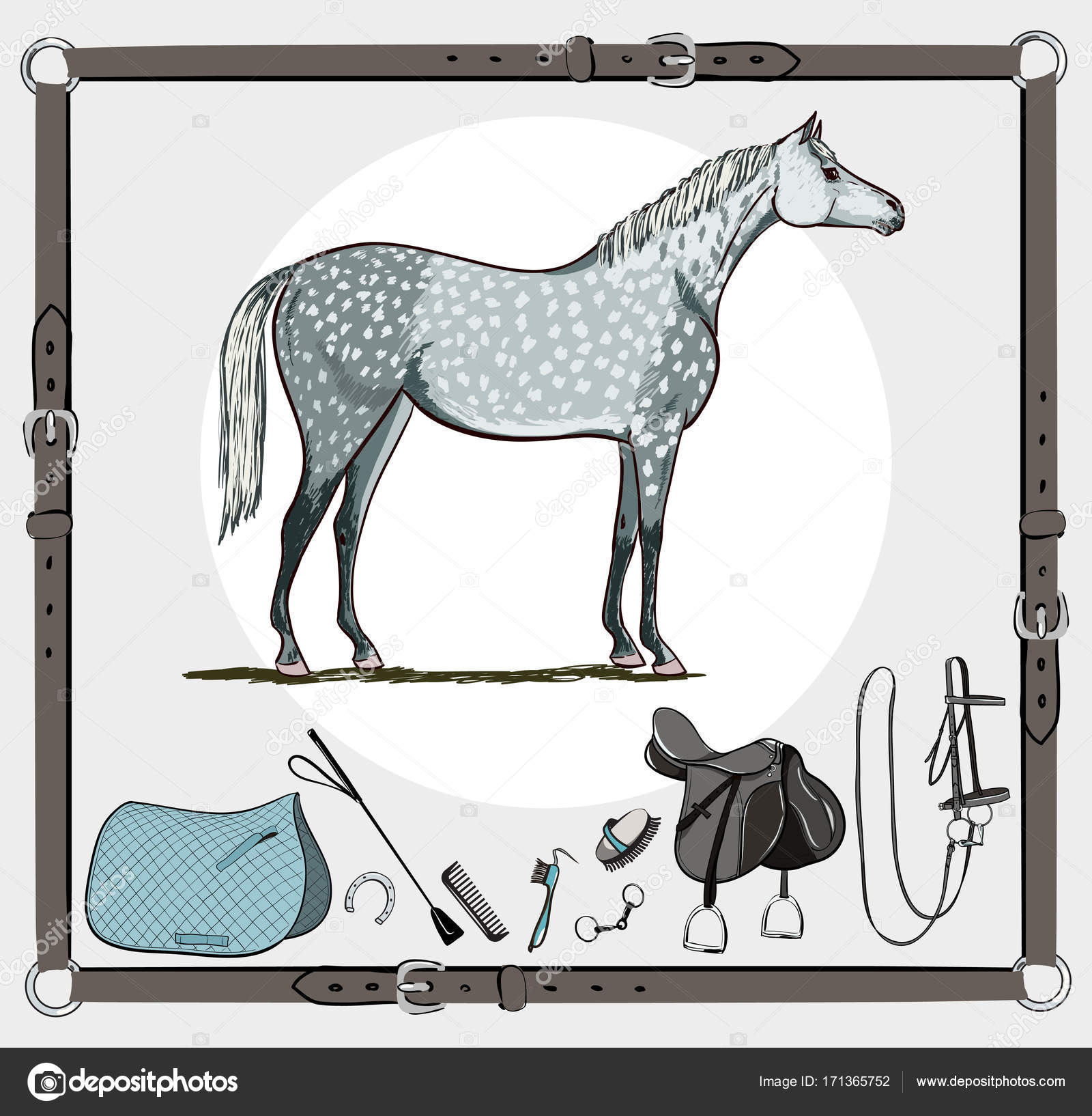 horse and riding tack tools in leather belt frame bridle saddle rh depositphotos com Equestrian Riding Clip Art Equestrian Riding Clip Art