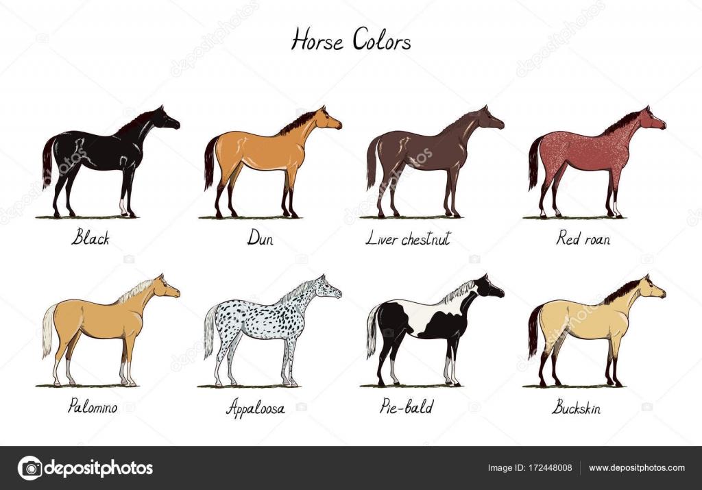 Caballo color gráfico conjunto. Colores de pelajes con texto. Tipos ...