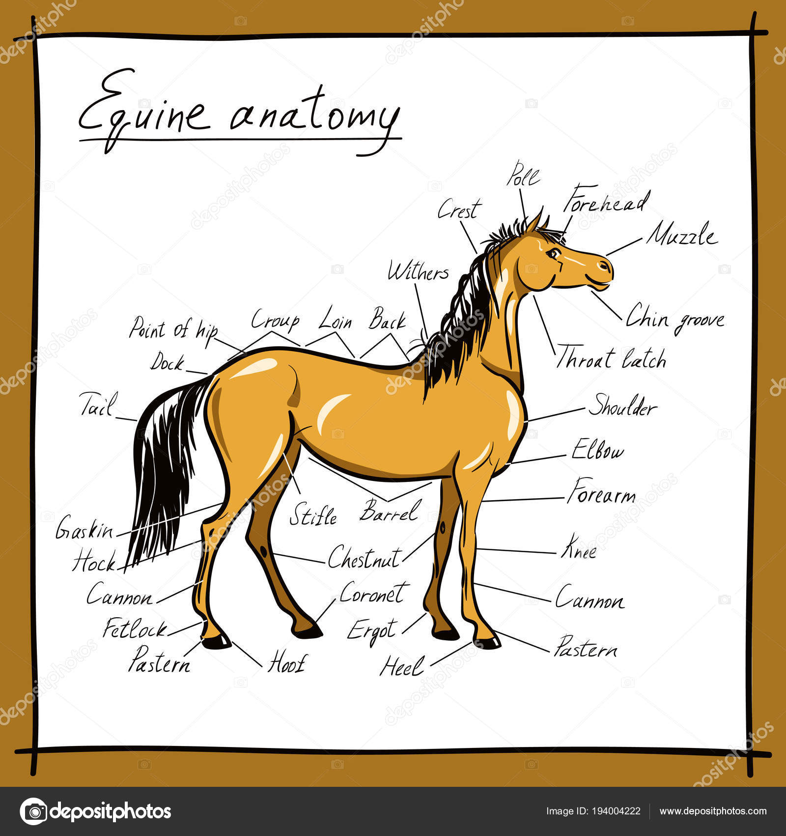 Parts Horse Equine Anatomy Equestrian Scheme Text Hand Drawing