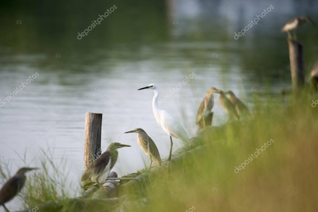 birds perching on riverbank