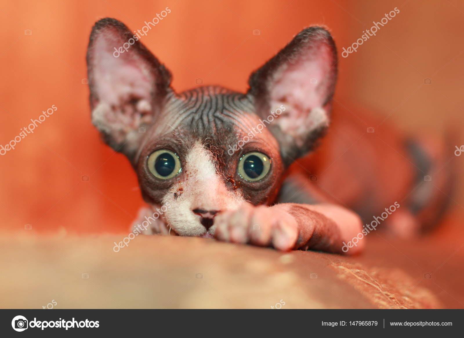Zdarma nahé kočička fotky