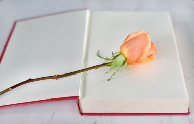 Rose flower and open red hardcover book near windows.