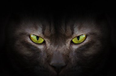 Eyes of black cat in dark, Hypnotic Cat Eyes