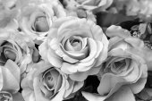 Photo Black and white roses flowers