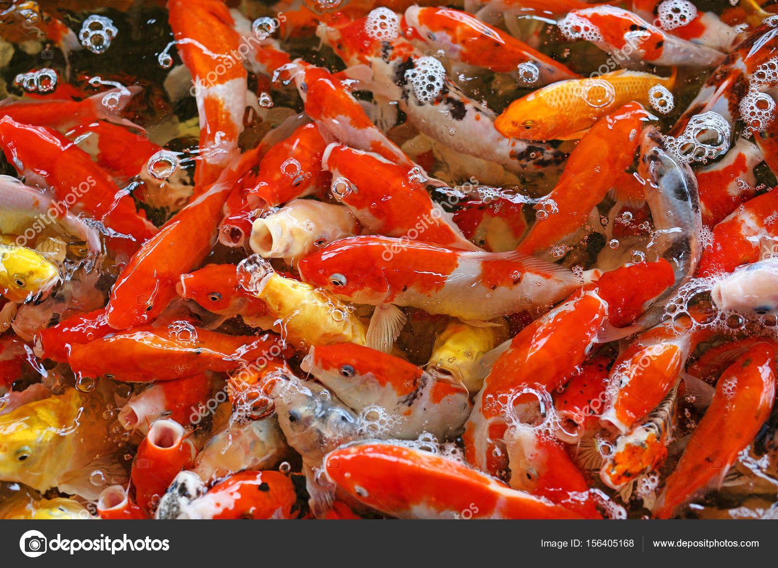 Colorful fancy carp fish, koi fish — Stock Photo © civic_dm@hotmail ...