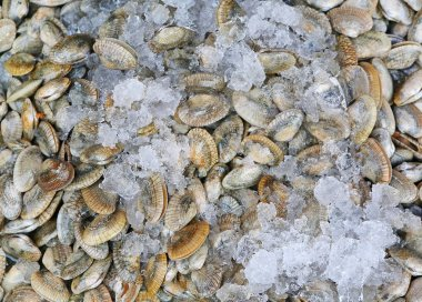 Fresh Mussels with ice