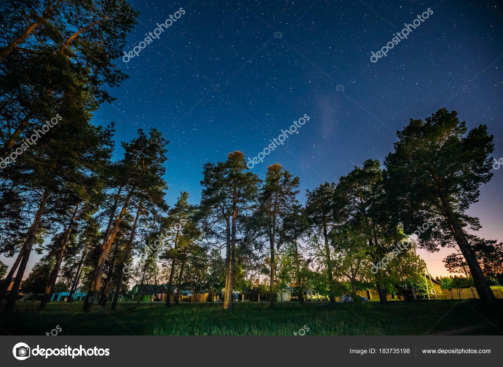 Imágenes: Bosques Nocturnos