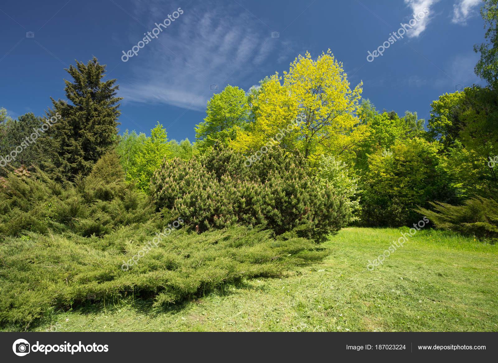 Arbres verts et arbustes dans le jardin de printemps. Jardin Design ...