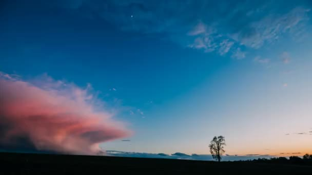 Time Lapse Time-lapse Timelapse Of Lonely Tree Growing In Spring Field At Sunrise. Morning Sunrise Sky Above Dark Countryside Meadow Landscape. Spring Nature