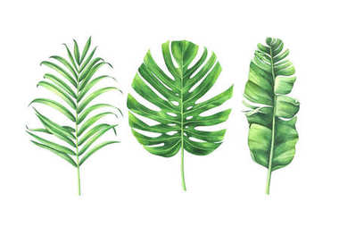 Watercolor tropical leaves set isolated on white background.