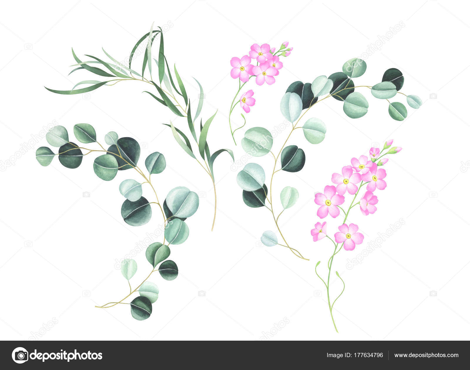 Set Pink Forget Flowers Eucalyptus Isolated White Background Hand