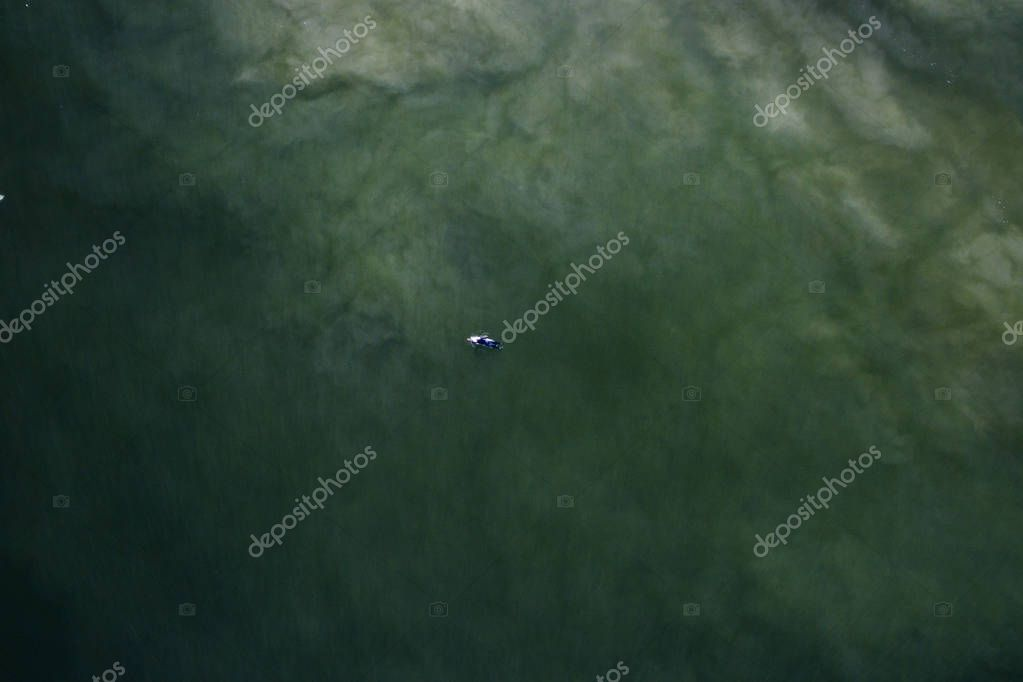 Surfer in ocean from above