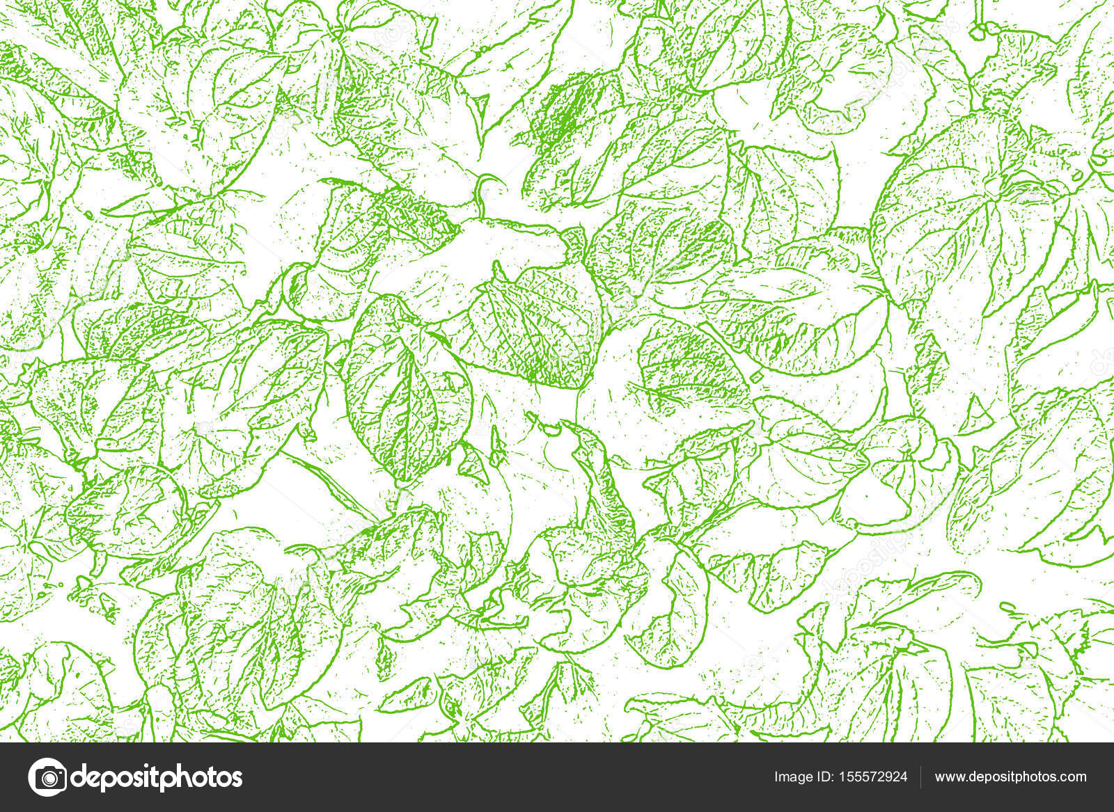 Green Leaves Skeleton Silhouette At White Abstract Texture Backg Stock Photo