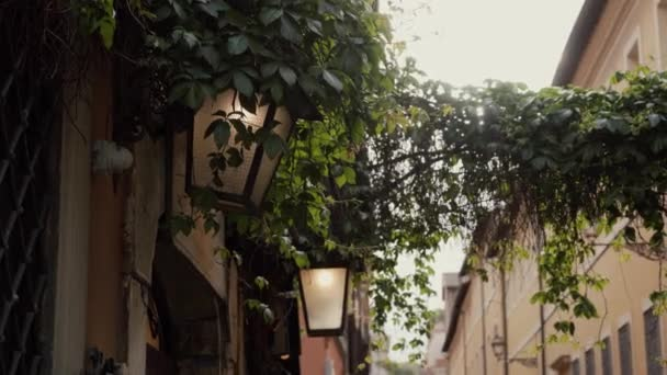 Close-up of green ivy lian overhanging between houses of street in historic town and old streetlight located on vintage wall on sunny day
