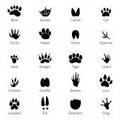 Fotografie verschiedene Fußabdrücke von Vögeln und Tieren. Vektor monochrome Bilder auf weißem Hintergrund