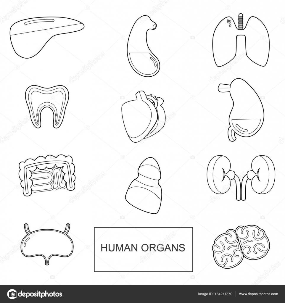 Menschlichen Organen in Umriss-Stil. Vektor-Icons Set isoliert auf ...