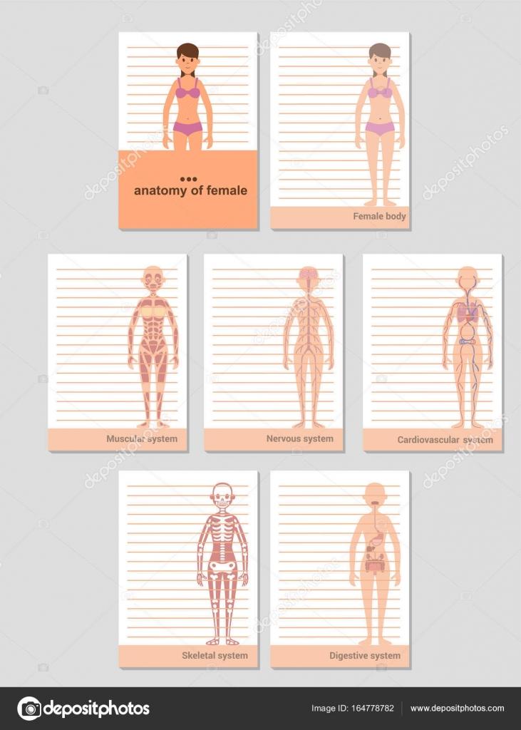 Notizblock A6 Format Datensätze. Anatomie des weiblichen Körpers ...