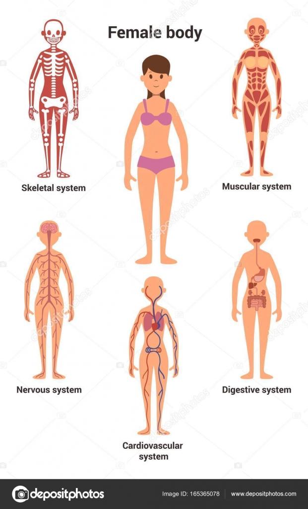 картинки женское тело
