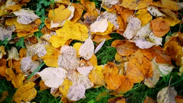 Background from autumn leaves on the ground, slow motion. Autumn mood concept